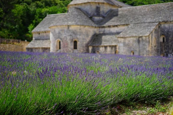 lavender-1275377_1920